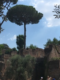 Love the trees in Rome.